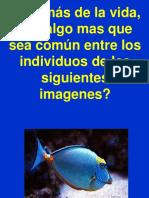 28126598 Introduccion Bioelementos y Biomoleculas