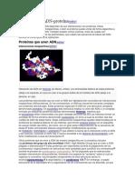 Ácido desoxirribonucleico 4