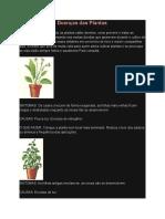 Como Tratar as Doenças Das Plantas
