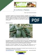 Lechosa o Papaya, Su Cultivo