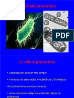 TEMA 11 La célula procariota