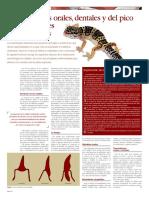 enfermedades_orales_de_los_reptiles.pdf