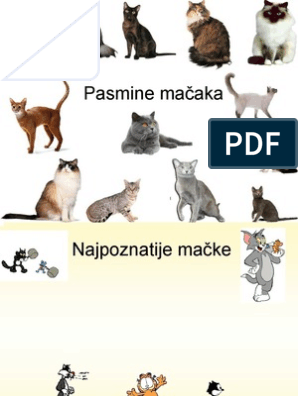 Crna uzgojna bijela maca