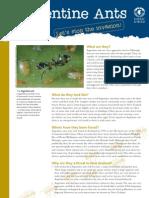 Argentine Ants Factsheet