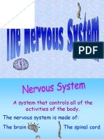 The Nervous System Lecture
