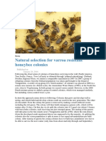 Natural Selection for Varroa Resistant Honeybee Colonies