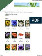 Katalog Bibit Bunga