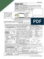 Bio-sem 04- Nutricion Celular