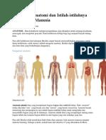 Pengertian Anatomi dan Istilah.docx