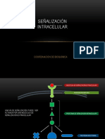 sennalizacion_intracelular