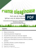 Plante Oleaginoase
