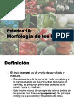 Clasificacion Frutos.docx