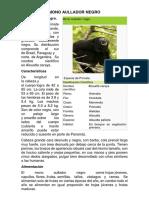 Mono Aullador Negro