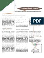 diferenciación celular.pdf