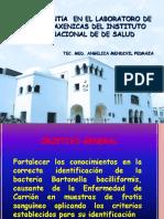 Dx Frotis Sang. Bartonella