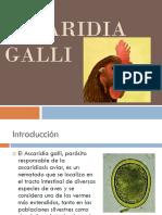 Ascaridia Galli