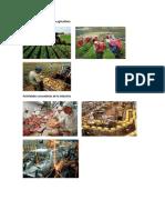 Actividades Primarias en La Agricultura