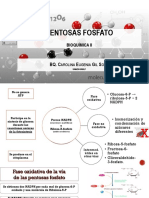 2. Pentosas fosfato
