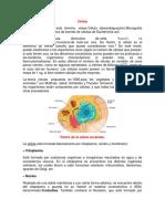 Célula1.docx