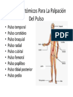 puntos anatomicos.docx