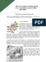 Anatomia de La Glandula Submaxilar