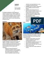 CLASIFICACION DE LOS ANIMALES.docx