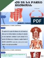 Musculos de La Pared Abdominal-Anatomia