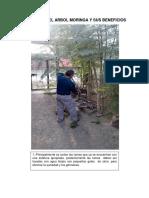 CULTIVO DEL ARBOL MORINGA Y SUS BENEFICIOS.docx