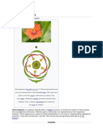 Floral Diagram