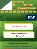 Clasificación de Las Plantas. Vicente Sarango
