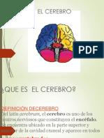 Cerebro Tradico
