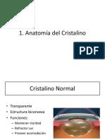 1. Anato Fisio Embrio Cristalino