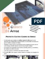 Cultivo in-Vitro Casero de Arroz - Presentacion.