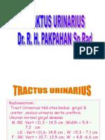 rad-Tract urinarius Presentation1.ppt