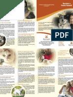 Foster Care Brochure