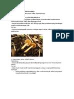biologi jamur