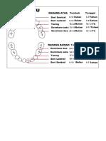 Urutan erupsi gigi.docx
