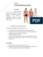 6 Tema 2 El Sistema Muscular Humano