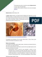 Cartilha - Melipona bicolor schenki Gribodo