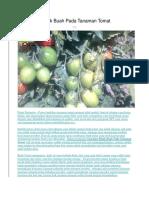 Cara Atasi Retak Buah Pada Tanaman Tomat