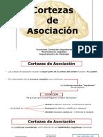 Cortezas Asociación Bio2018-6