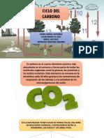 CICLO-DEL-CARBONO-1