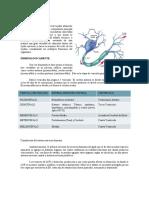 Sistema Nervioso segundo medicina cunoc