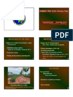 Rubber Tree Seed Production - Ppt