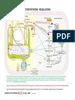 Photosynthesis Regulation