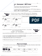 Light and Dark Activity Worksheets