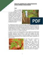 Artículo Científico de La Moringa