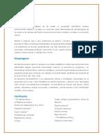 Resumen Lesiones Precancer y Pseudocancer en Dermatologia