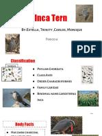 estella carganilla - presentation for chaffee zoo animal 2018