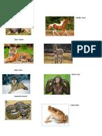 Álbum de animales en Kiche